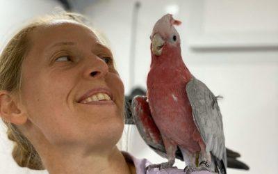Introducing Skylarks Vets – Mobile and static veterinary clinic in Edenbridge